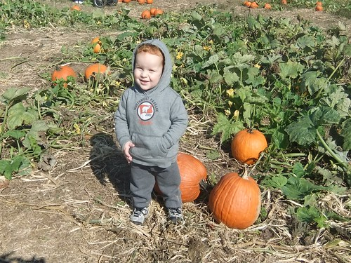 in the pumpkin patch 2011 by aviva_hadas