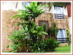 Landscaping with tropical plants at Felda Residence Hot Springs Hotel, Sungkai