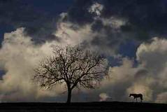 Vormittag mit Pferd