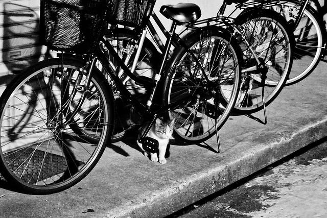 Today's Cat@2011-10-26