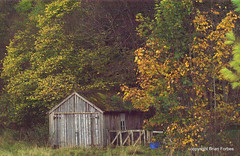 Old garage in the woods. (B4bees .(2m views)) Tags: autumn trees forest scotland garage perthshire hut fencing glendevon