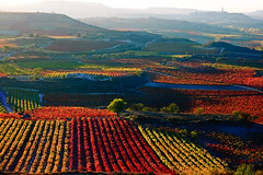 As far as the eye can see (Ignacio Lizarraga) Tags: autumn color landscape paisaje vineyards otoo larioja viedos zyber dsc015201685