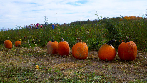 Central Ohio Pumpkin Patches