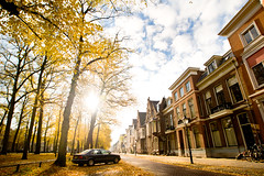 Autumn / Herfst, Utrecht, 2011 (lambertwm) Tags: city autumn trees sunlight leaves yellow backlight bomen utrecht herfst thenetherlands backlit leafs stad tegenlicht zonlicht againstthelight bladeren