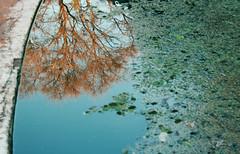La memoria de los estanques (Carlos Alberto Tellera) Tags: reflejo rbol memoria tiempo robertolambertucci elartedelainvisivilidad hernnvellmount julietaperezmendizabal