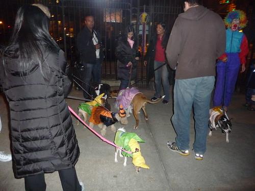 Dog Park Halloween