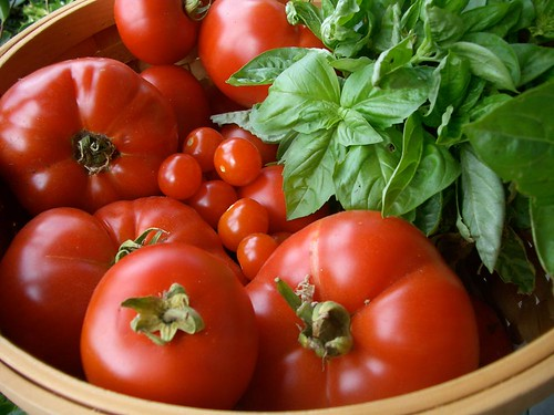 pic_1_tomatoes