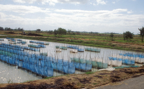 Aquaculture, Thailand. Photo by WorldFish, 2004