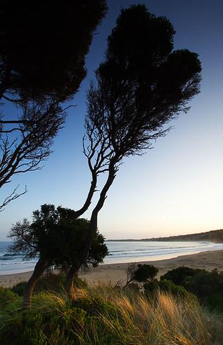 Anglesea, Victoria, Australia IMG_3183_Anglesea