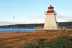 DGJ_4694 - Neil's Harbour Lighthouse