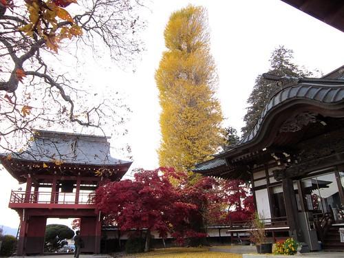 長円寺の山門 2011年11月8日15:51 by Poran111