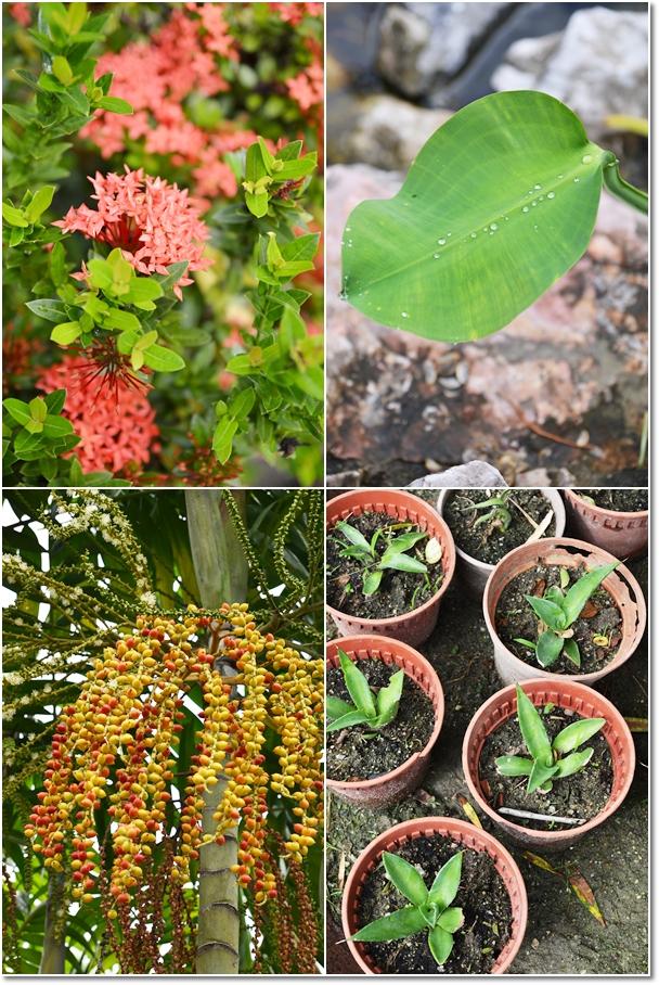 Plants, Flowers & Pots