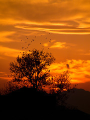 Sunset (Mohammad Sh.) Tags: sunset orange cloud sun mountain tree bird birds fire mount