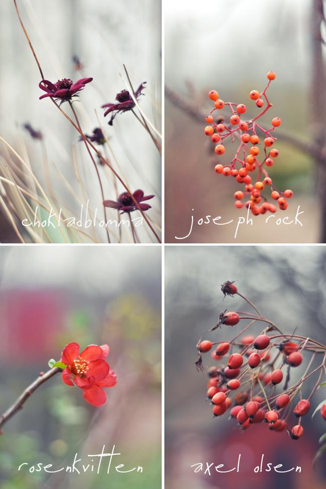 det blommar i rött