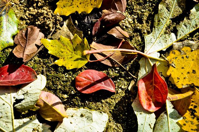 otoño 17