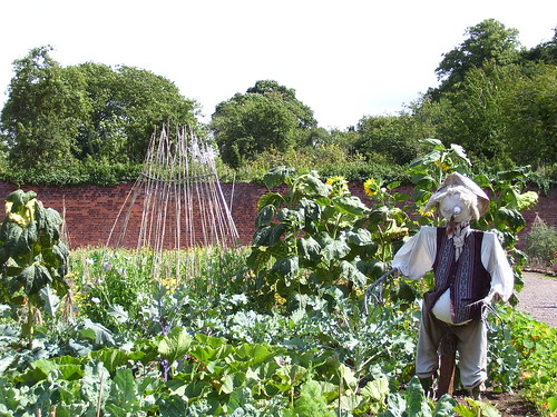 Shugborough Hall - scarecrows