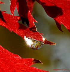 Colours of Autumn (oomphoto) Tags: autumn macro tree waterdrop drop autumncolours sunburst refractedimage