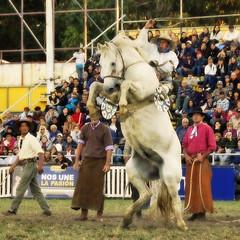 El tordillo (Eduardo Amorim) Tags: horses horse southamerica caballo uruguay cheval caballos cavalos prado montevideo pferde cavalli cavallo cavalo gauchos pferd hest hevonen chevaux gaucho 馬 américadosul montevidéu häst uruguai gaúcho 말 amériquedusud лошадь gaúchos 马 sudamérica suramérica américadelsur סוס südamerika jineteada حصان άλογο americadelsud gineteada ม้า americameridionale semanacriolla semanacriolladelprado eduardoamorim semanacriolladelprado2011 ঘোড়া