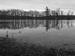 Treeline Silhouettes (Boneil Photography) Tags: park trees blackandwhite reflection silhouette canon ma powershot g6 haverhill kenoza boneilphotography brendanoneil