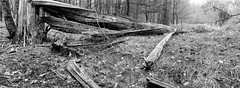 A big crash in the forest (Fabrizio Zago - Photography and media) Tags: blackandwhite bw film nature alberi analog forest germany landscape deutschland blackwhite europa europe natural pano natura panoramic bn hasselblad panoramica scanned n