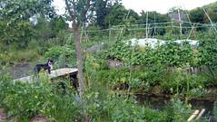 P1080356 (Nicolas Sawicki) Tags: formation le permaculture bechellouin maraîchage