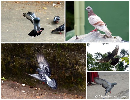 Birds of Gangtok