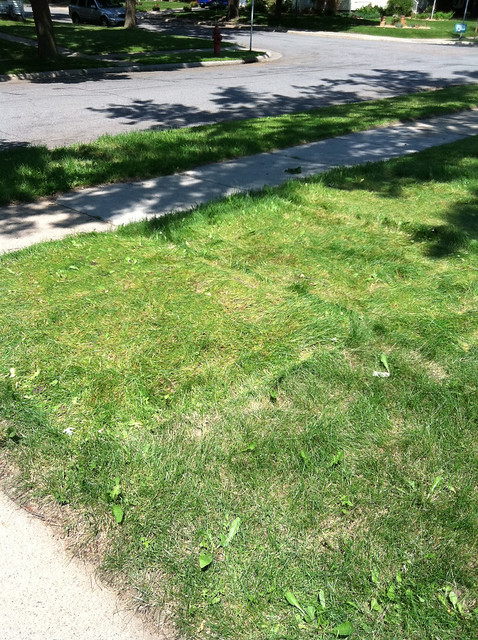 front yard grass
