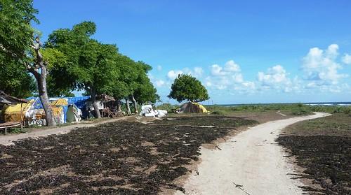 Sumbawa 4-Plage de Lakey (47)