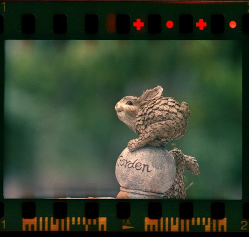 The Rabbit - Zenit 122S PhotoSniper + MC Tair-3S 300mm f/4.5