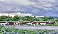 Triangle X Ranch Horses (Marvin Bredel) Tags: ranch horses mountains wyoming jacksonhole grandtetonnationalpark duderanch trianglexranch trianglex marvinbredel
