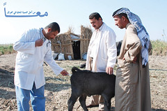 From the Loca Area Development Programme in Iraq (UNDP Arab States) Tags: iraq un undp ladp