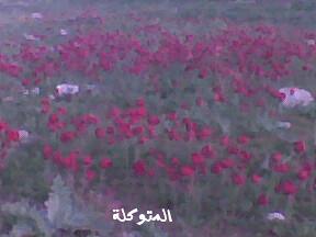 الاردن في الربيع صور 5909637850_ce6e2b2539.jpg