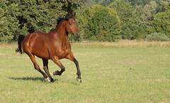 Reba (sagetopaz) Tags: horses horse equine