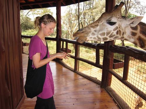 feeding giraffe nairobi kenya africa by Danalynn C