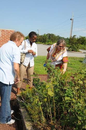 People's Garden committee member Rhonda Tyndall (left) shows DSU nutritionists Donna Brown and Carol Giesecke exactly which veggies and herbs will be ready for use in their upcoming cooking demonstration.