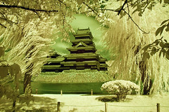 Matsumoto Castle Through Wind-blown Willows In Infrared (aeschylus18917) Tags: castle nature japan architecture landscape ir nikon scenery d70 nikond70 fort surreal infrared keep  moat matsumoto weepingwillow fortress nagano 1870mm naganoprefecture  tenshukaku naganoken   matsumotocastle crowcastle  1870f3545g matsumotocity matsumotoj d700   nikond700 matsumotoshi karasujo nikkor1870f3545g danielruyle aeschylus18917 danruyle druyle   nikkor1870f3545gdx