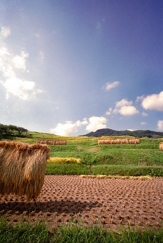 Spectacle of terraced paddy fields 2.
