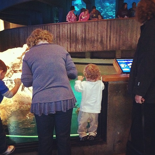 Looking at the penguins with Gigi