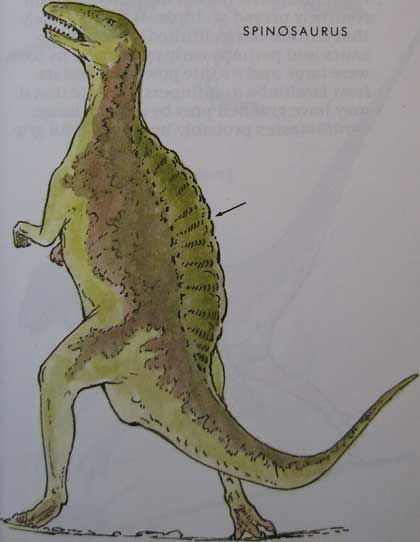 Peterson First Guides: Dinosaurs p. 41