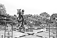 Jump ! Hump 8 ! (Anoop Negi) Tags: show portrait horses horse india photography for photo jumping media image photos delhi indian centre bangalore creative images best po mumbai karnataka anoop equestrian negi excellence dressage photosof ezee123 imagesof jjournalism
