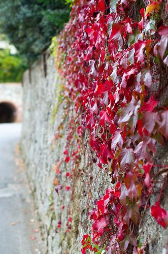 Si el otoño no viene...