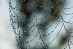 Morning Dew on a Spider Web (Judy Rushing) Tags: spiderweb dew waterdrops gamewinner gamex2winner herowinner ultraherowinner thepinnaclehof kanchenjungachallengewinner rossbarnettereservoir gamex3winner thepinnacleblog pregamewinner npgm shchofwinner tphofweek120