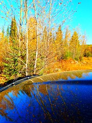 Hoodwinked! (peggyhr) Tags: blue friends sky orange white canada leaves yellow truck reflections rocks bc autumncolours dodge hood grasses reflexions spruce shrubs cariboo poplars finegold youmademyday natureplus crystalaward peggyhr flickrbronzeaward citritbestofyours heartawards theunforgettablepictures therubyawards beautifulshot vanagrammofontheoldgramophone 100commentgroup doubledragonawards artofimages zensationalworld lomejordemisamigos nossasvidasnossomundoourlifeourworld avpa1maingroup chariotsofartists level1photographyforrecreation photohobbylevel1 blinkagainforinterestingimages vivalavidalevel1 p1060575app