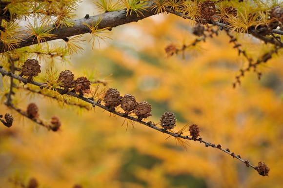 20111018-_DSC1124-HououSanzan
