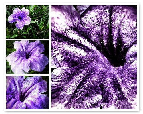 127/365- Purple by elineart