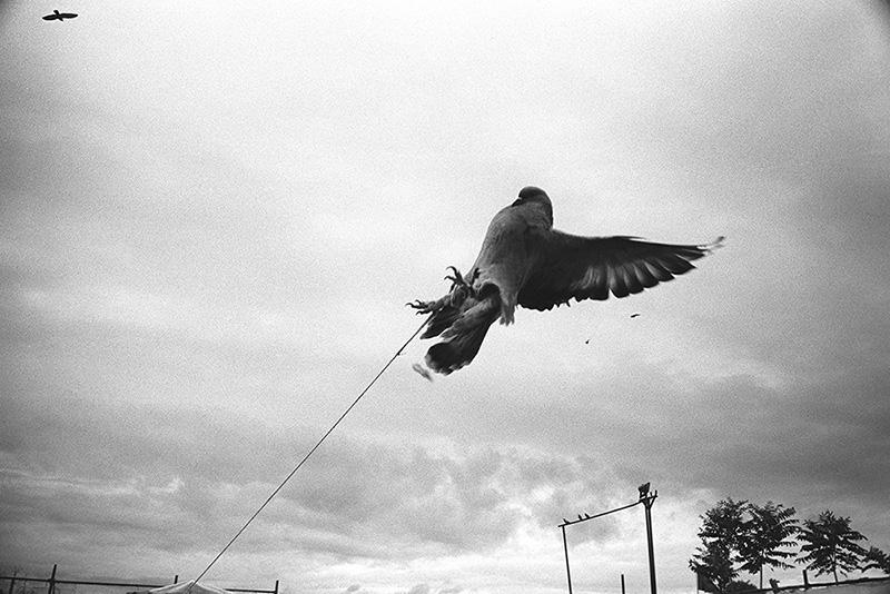 Pigeon market / Голубиный рынок (2)