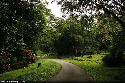 Bukit Brown Cemetery - Towards Andrew Road