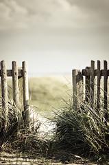 Zaun (koeb) Tags: fence norderney northsea zaun nordsee möwendüne