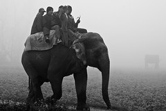 Elephant riding (Dick Verton) Tags: travel nepal people mist elephant asia sitting riding sit seated sauraha