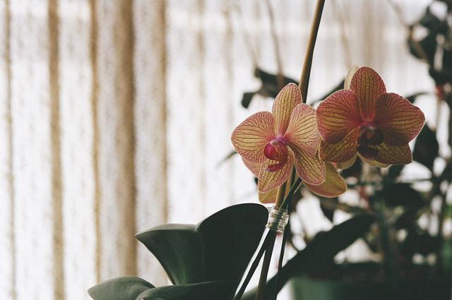 interiors 7 - orchids